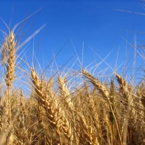 Cereali Floriddia