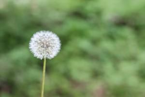 Soluzioni per le allergie
