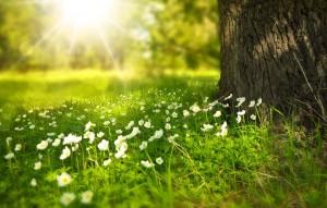 Le allergie di primavera